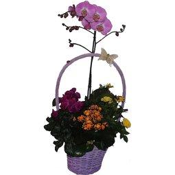 Cosulet cu flori perene