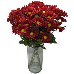 Crizanteme rosii (5)