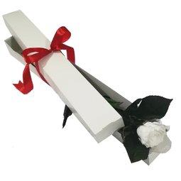 Cutie 1 trandafir alb conservat