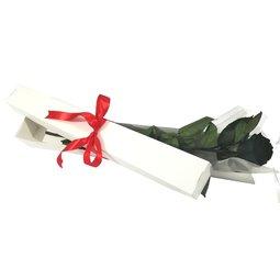 Cutie 1 trandafir negru conservat