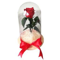 Dragoste si trandafiri nemuritori - rosu