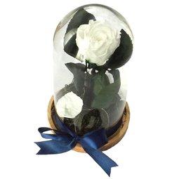 Dragoste si trandafiri nemuritori - alb