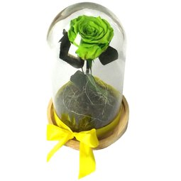 Dragoste si trandafiri nemuritori - verde