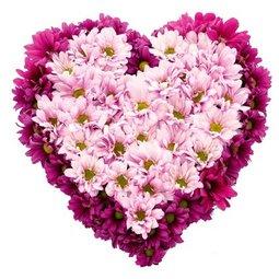 Inima din crizanteme