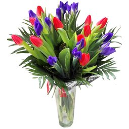Irisi albastri si lalele rosii