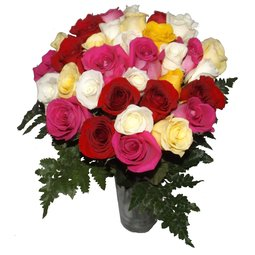 Magie cu trandafiri