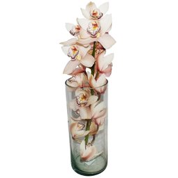 Orhidee Cymbidium in vaza