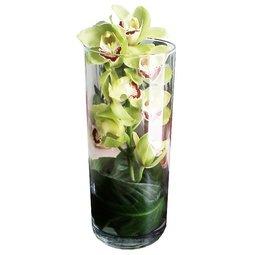 Orhidee in vaza