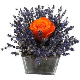 Trandafir nemuritor portocaliu