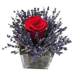 Trandafir nemuritor rosu