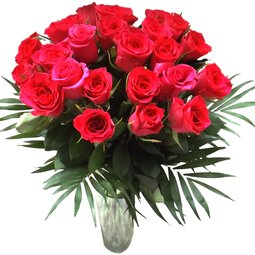 Trandafiri cyclam