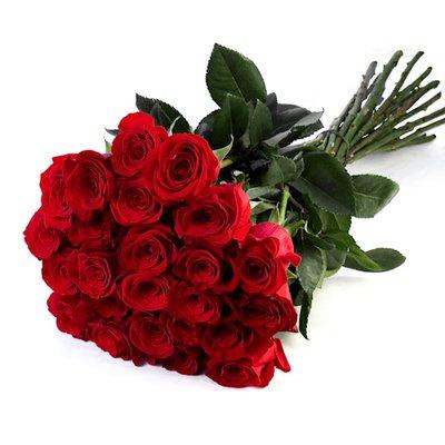 24 Rose Rosse
