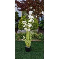 Allium (Decorative Onion) Plant, 132CM
