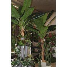 Banana Plant, 280CM