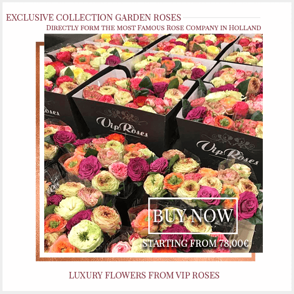 Garden Roses Collection FlorPassion Milan