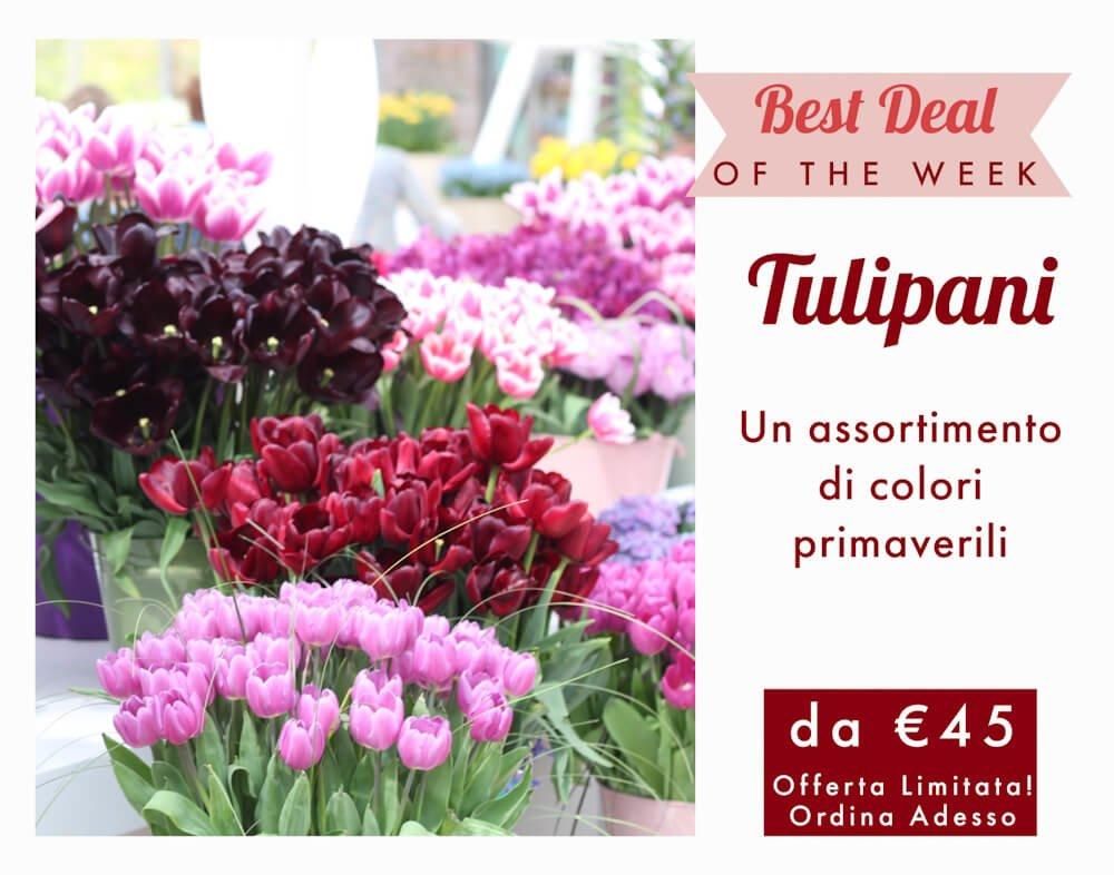 Tulipani consegna fiori