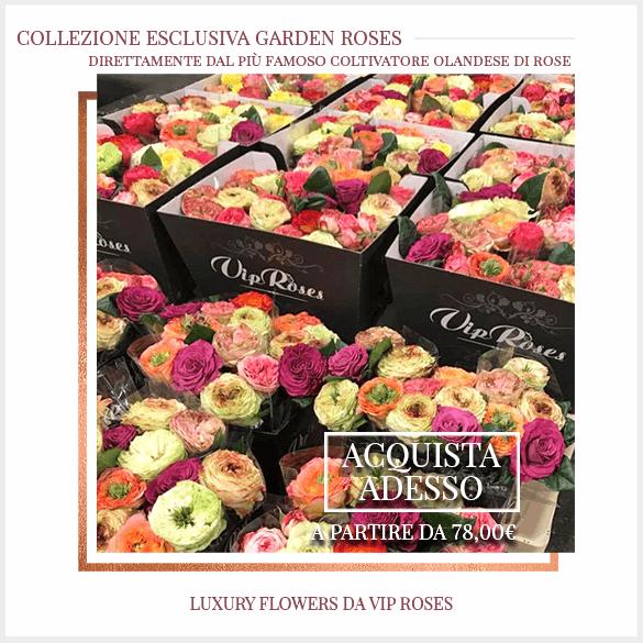 Rose Inlgesi Garden Consegna FlorPasiion