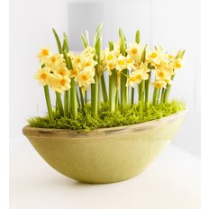 Narcissus Bulbs Vase | Same Day Flowers Milan | FlorPassion