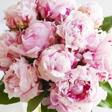 Bouquet Peonie Rosa