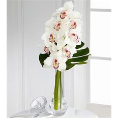 Bouquet Cymbidium Orchid | Flowers Delivery Milan