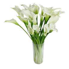 Calla Lilies | Flowers Delivery Monza and Milano