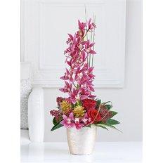 Composizione con Orchidee Cymbidium per Natale Consegna Milano e Roma