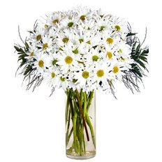 Daisy Bouquet | Flowers Online to Milan | FlorPassion