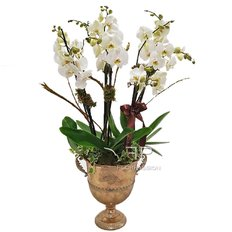 Luxury White Orchid | Send Flowers to Milan Italy