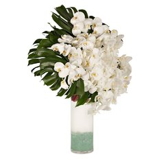 White Orchids | Luxury Flowers Delivery Milan Monza Rome