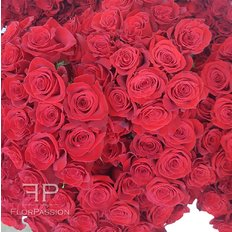 Red Roses Milan | Same Day Flower Delivery Milan