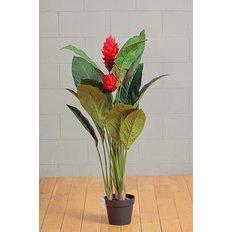 Ginger Plant, 121CM, Red