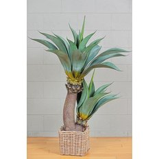 Green Agave Plant, 140CM