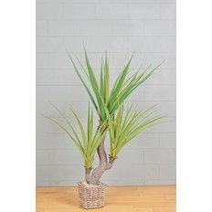 Green Aloe Plant, 160CM