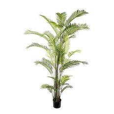 Green Areca Palm, 270CM