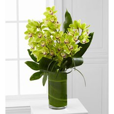 Cymbidium Orchid | Send Flowers to Milan | Luxury Florist FlorPassion