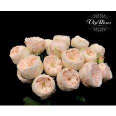 Bouquet Rosa Inglese | Collezione esclusiva FlorPassion Milano