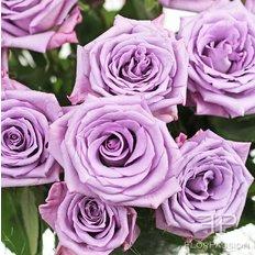 Ocean Spring Roses