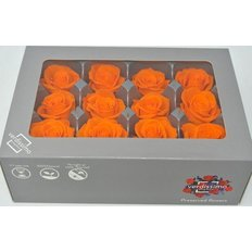 Orange Preserved Mini Roses, 12pcs