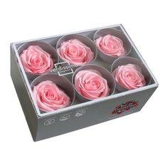 Pastel Pink Preserved Roses, 6pcs