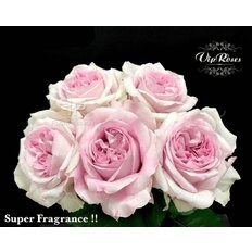 Garden Roses Patchouli Vip Roses | Flowers Delivery Milan