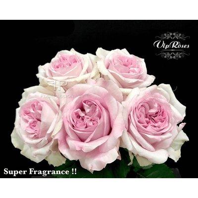 Patchouli Roses