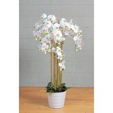 Phalaenopsis Orchidea, Bianco, 142CM