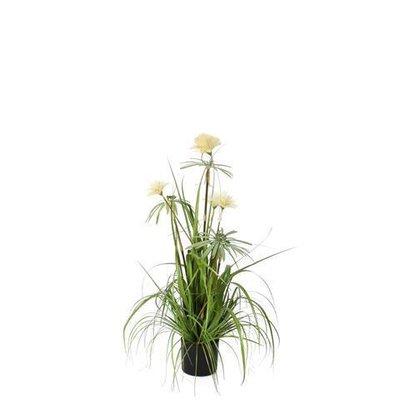 Pianta Grass Pom Pom, 90CM