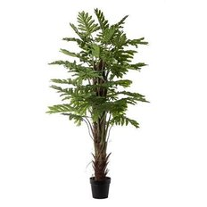 Pianta Philodendron, 170CM