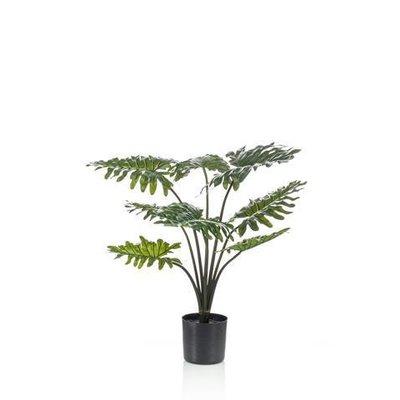 Pianta Philodendron, 60CM