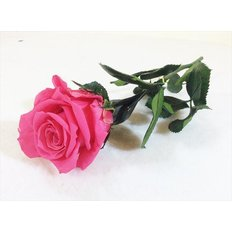 Preserved Mini Rose, Dark Pink