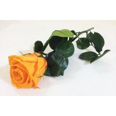 Preserved Mini Rose, Orange