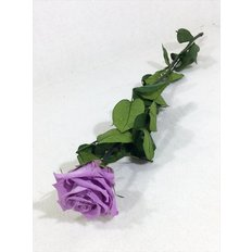 Preserved Rose, Lilac