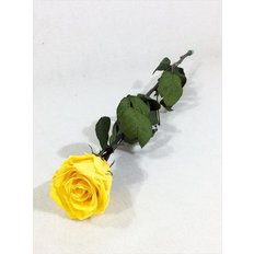 Preserved Rose, Yellow