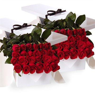 Quarantotto Rose Rosse in Scatola Regalo